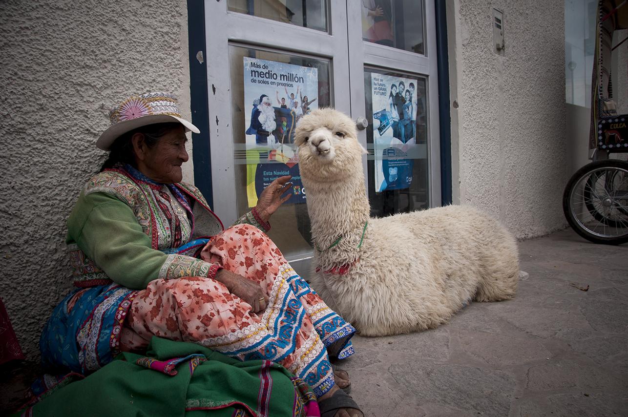 Peru_Cañon_Colca_Chivay_Alpaca_Sonsoles Lozano