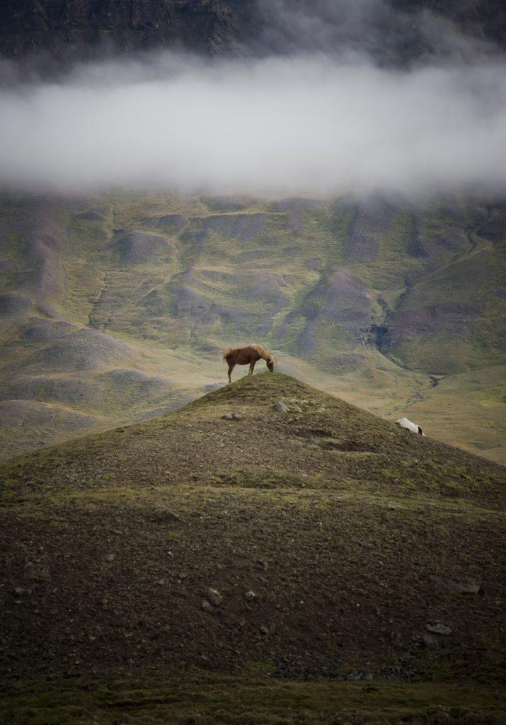 Viaje Islandia. Caballos. Sonsoles Lozano