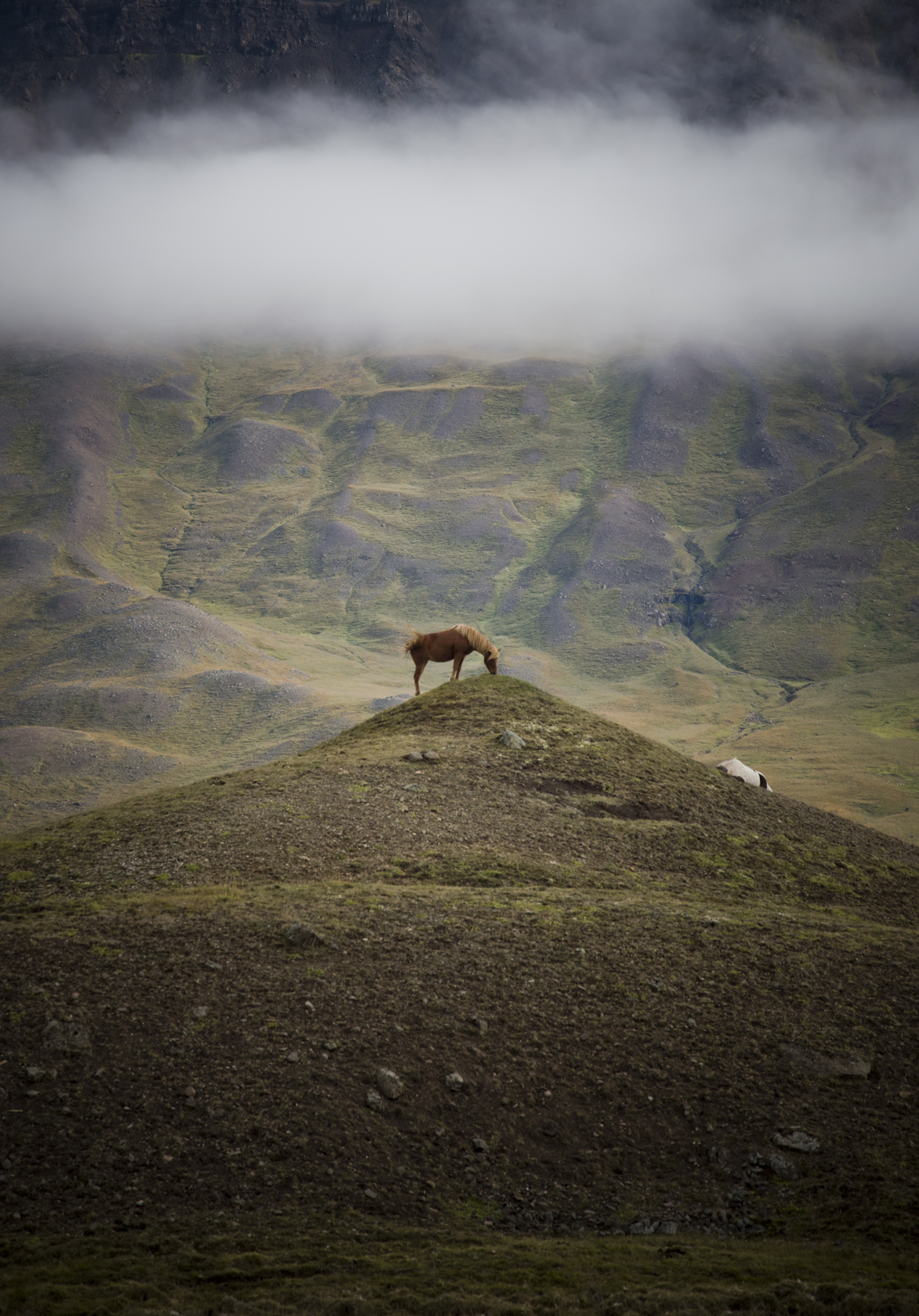 Islandia-caballos-sonsoles-lozano-1