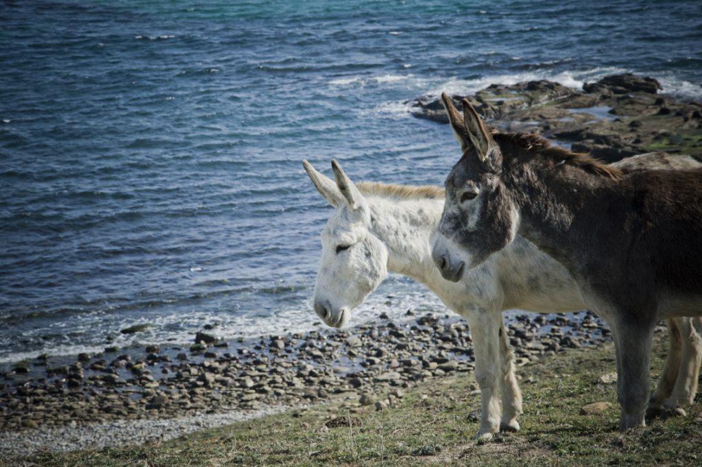 Ruta-senderismo-Algeciras-Tarifa-colada-de-la-costa-burros
